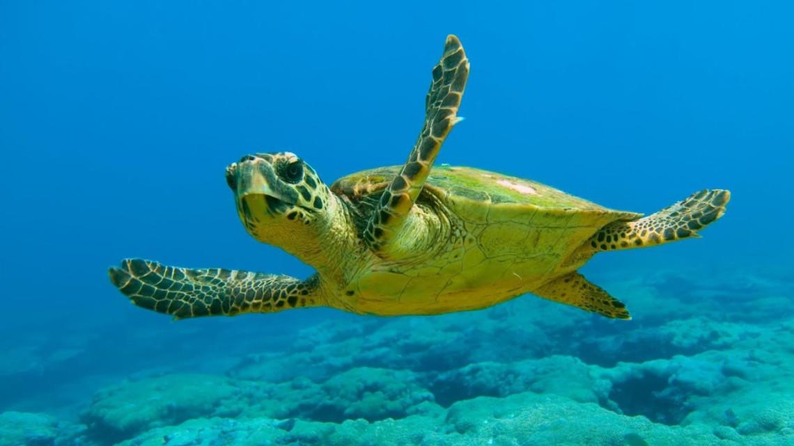 Top 10 curiozităţi despre broasca ţestoasă | oferte-brasov.ro