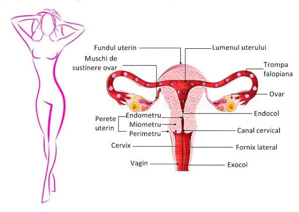 pierderea în greutate de retenție a spermei