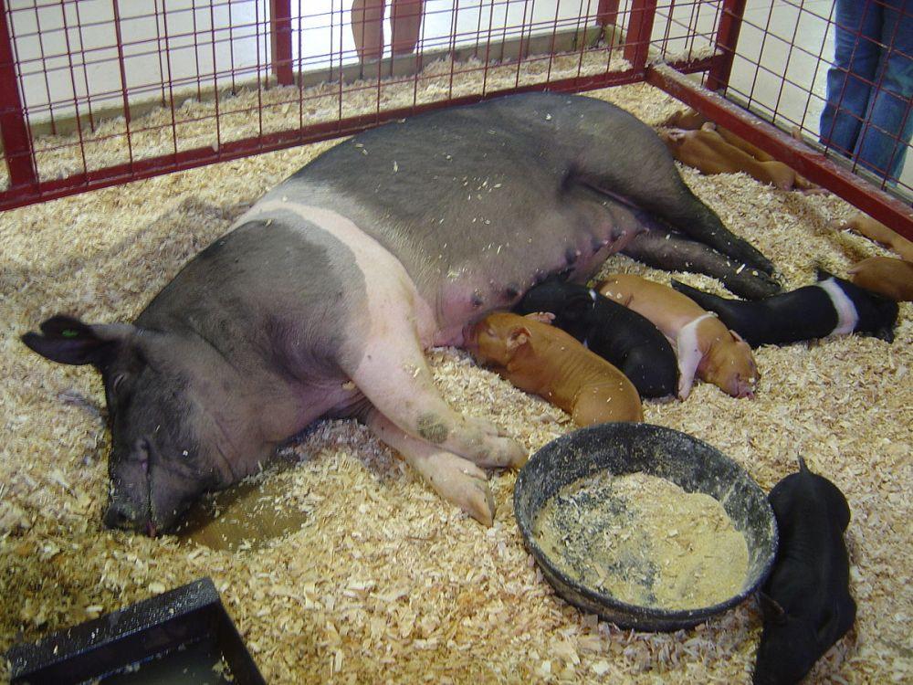 natalie pierderea în greutate dormer)