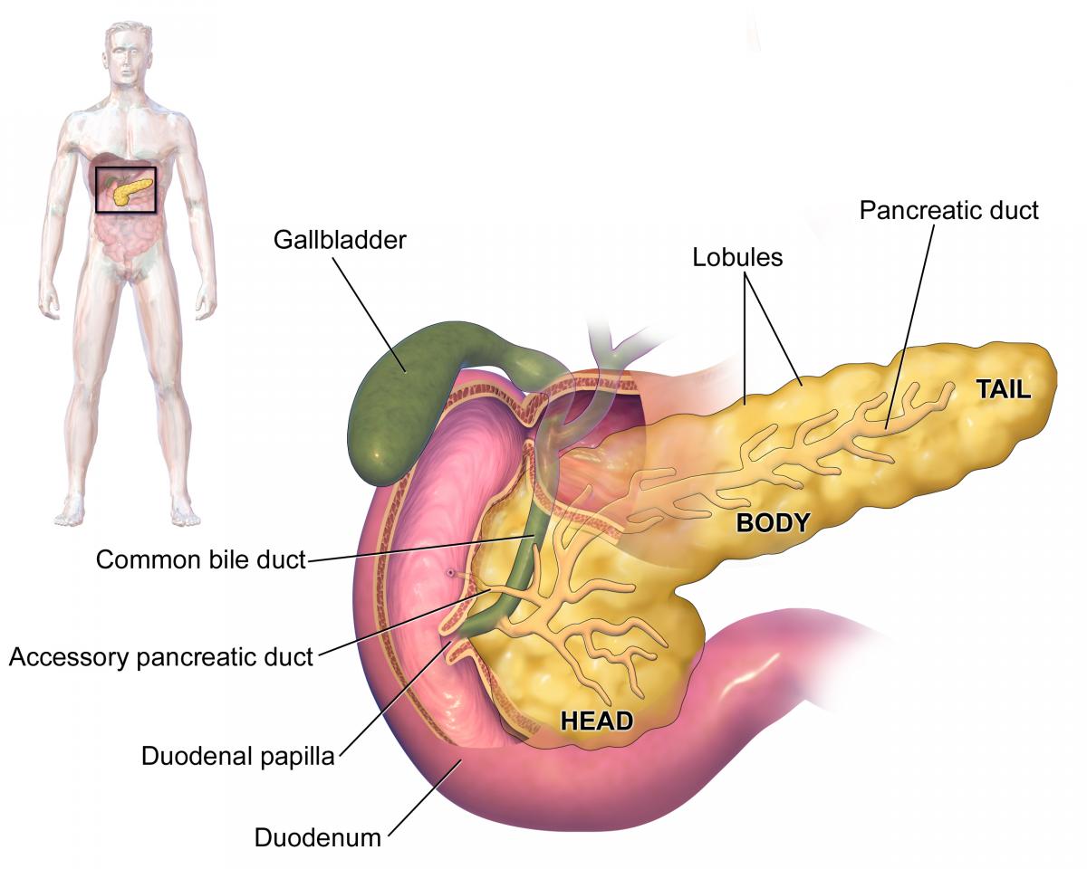 cum să slăbești cu pancreatita oboseala și se ard