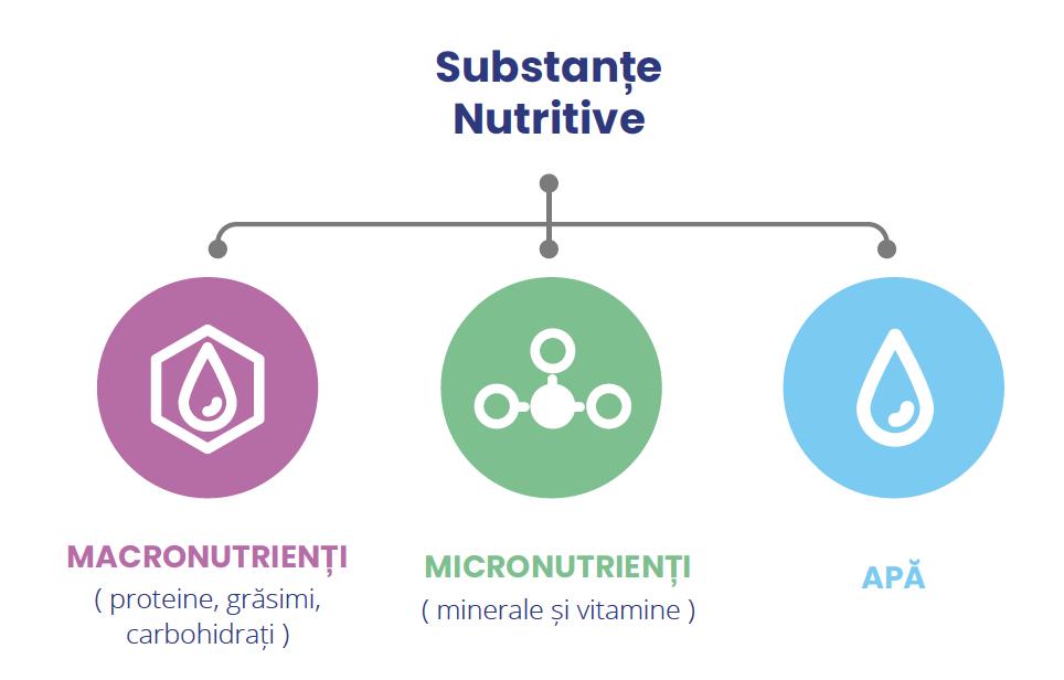 metabolizarea scăderii în greutate încetinește viteza metabolică de repaus grăsime