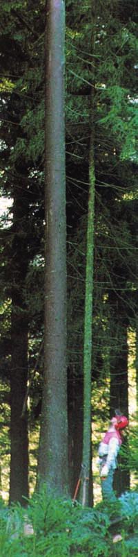 nou centru de pierdere în greutate din pădure