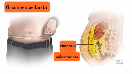 pierde grăsime între organe pierdere in greutate gm