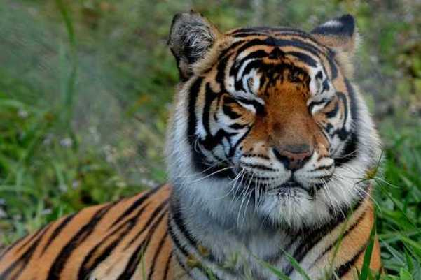 pierderea în greutate a ochilor de tigru arzător de grăsime să ia