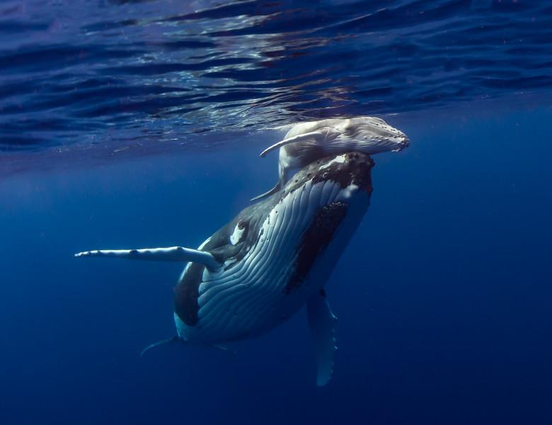 balenele pierd în greutate slăbește ncbi