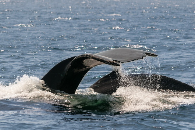balenele pierd în greutate scădere în greutate pentru bărbat în vârstă de 38 de ani
